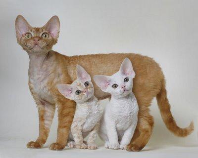 กำเนิดแมว!!!! ความเป็นมาของแมว และการจัดจำแนก