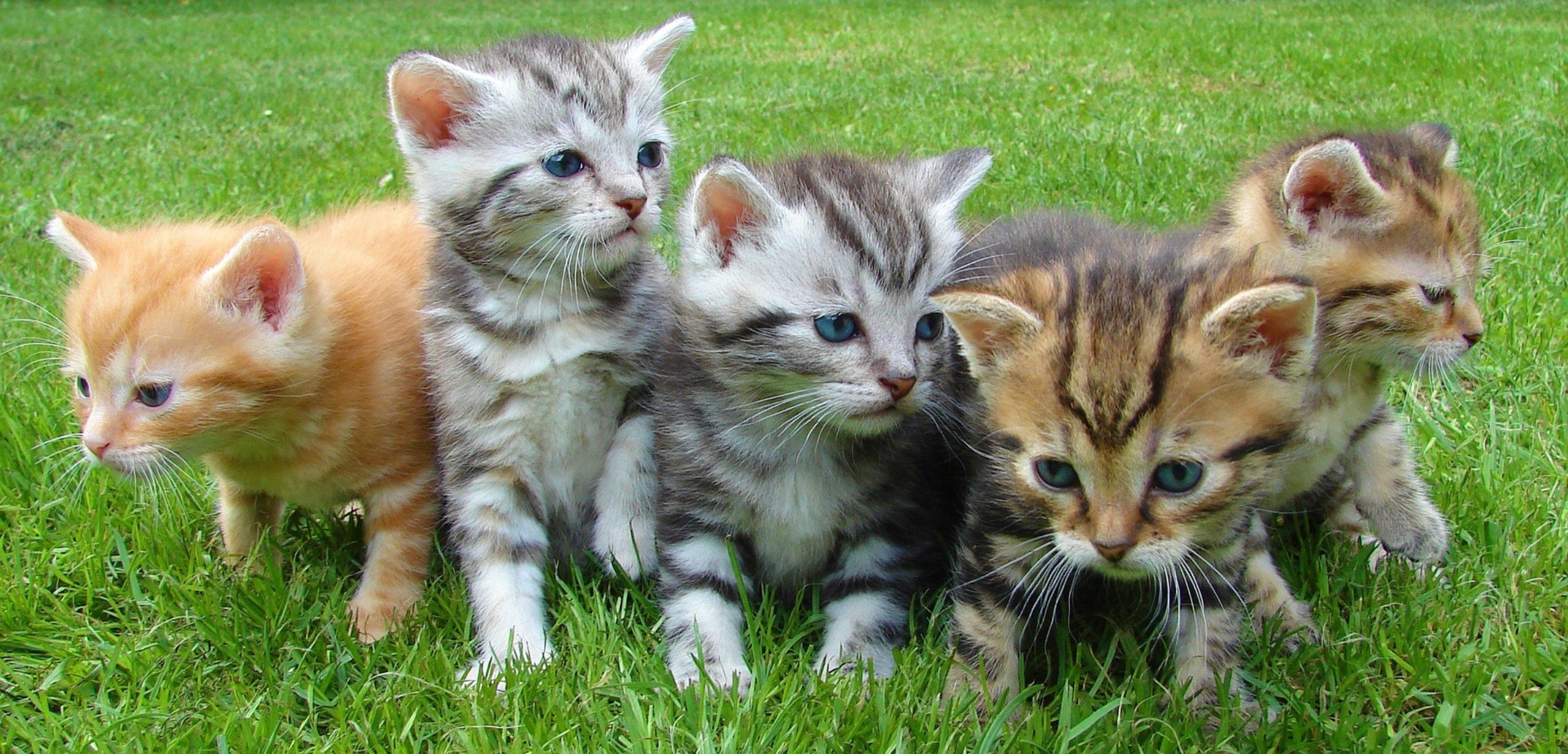 รวมพันธุ์แมวน่ารักๆ