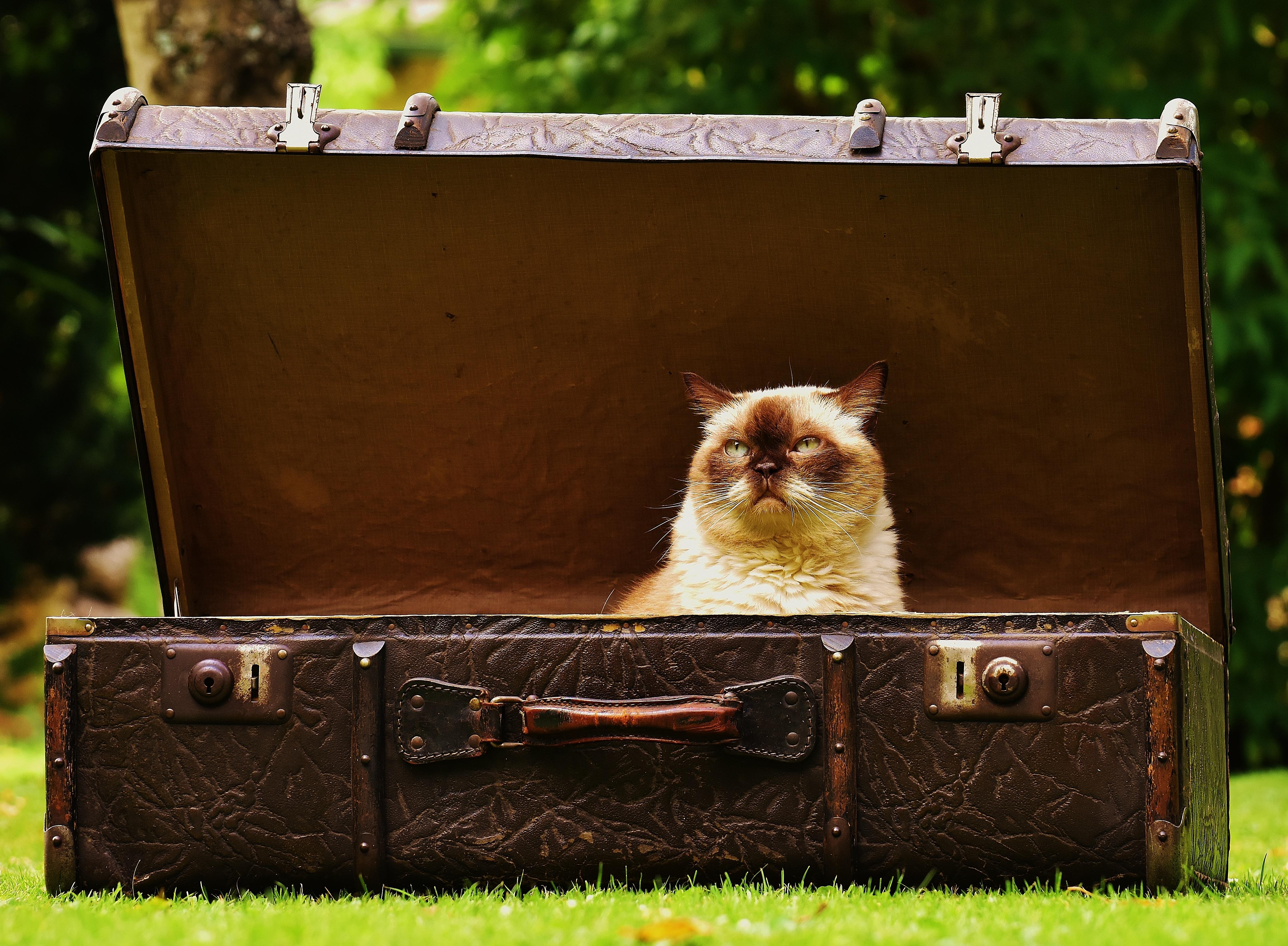 มารู้จักแมวพันธุ์ไทยแท้ 23 ชนิด ที่ปัจจุบันเหลือแมวมงคลเพียง 4 ชนิด! เองนะคะ