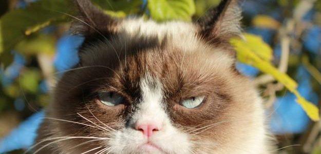 ทาร์ดเจ้าแมวหน้าบึ้ง (Grumpy Cat)