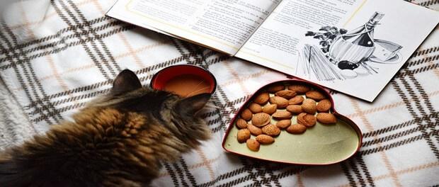 3 สูตรอาหารแมว ที่คนรักแมวทำเองได้