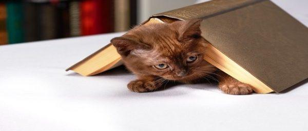 3 เรื่องน่ารู้ ก่อนเตรียมตัวเลี้ยงน้องแมว