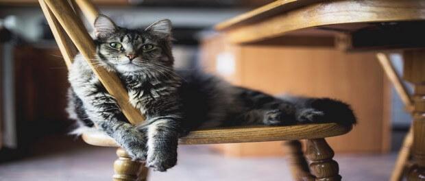 15 เรื่องที่น่าอัศจรรย์ของแมว
