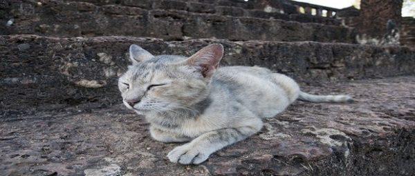ความเชื่อ และลักษณะแมวที่ไม่ควรเลี้ยง
