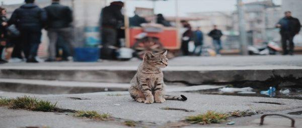 แมวจรจัด กับลักษณะนิสัยที่ทาสแมวควรรู้