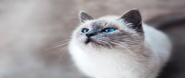 มือใหม่หัดเลี้ยง กับการเรียนรู้นิสัยแมวๆ