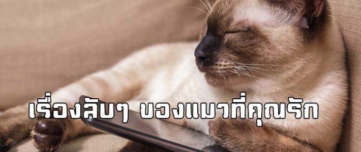 ใครยังไม่รู้ 17 เรื่องลับ ๆ ของแมวที่คุณรัก