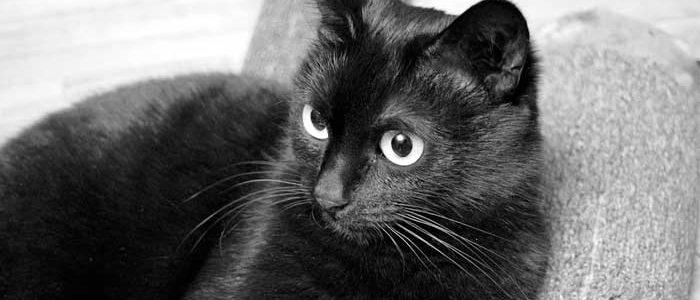 รู้จักแมวดำนิลรัตน์