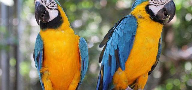 นกแก้ว นกแสนรู้ ที่ใครเห็นก็หลงรัก