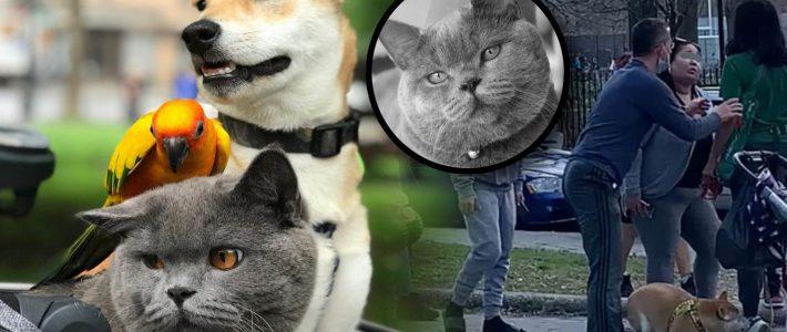 หญิงไทยถูกทำร้ายในสหรัฐฯ แมวตาย!!